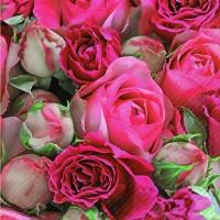 Servietten 33x33 cm - Rapsody pink dunkel
