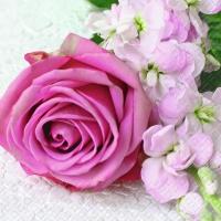 Servietten 25x25 cm - Vanessa pink