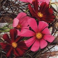 Servietten 33x33 cm - Cosmos Flowers