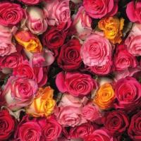 Servietten 33x33 cm - Rosas Coloridas