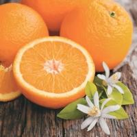 Lunch Servietten Fresh Oranges