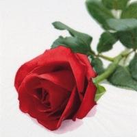 Servietten 33x33 cm - Rosa Nobile