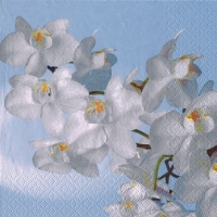 Servietten 33x33 cm - Orchidea Bianca aqua