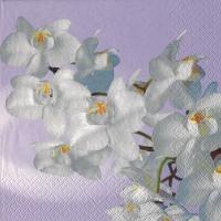 Servietten 33x33 cm - Orchidea Bianca vintage lavender
