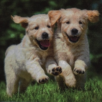 Servietten 33x33 cm - Happy Puppies