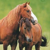 Servietten 33x33 cm - Zwei Pferde