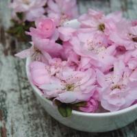 Servietten 33x33 cm - Sakura Blossoms