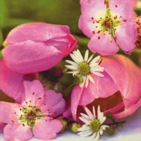 Servietten 33x33 cm - Fiora Rosa