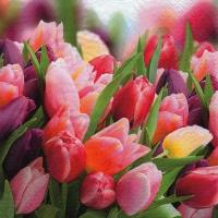 Servietten 33x33 cm - Pink & Violet Tulips