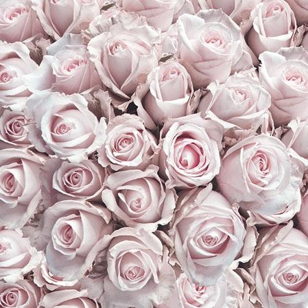 Servietten 25x25 cm - Pastel Roses