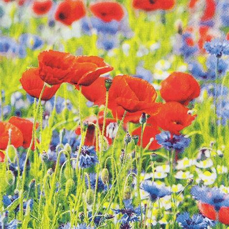 Servietten 33x33 cm - Poppies and Cornflowers