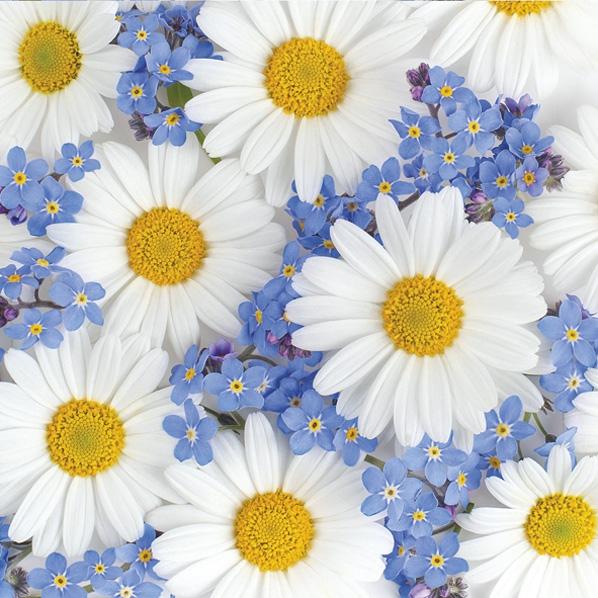 Servietten 33x33 cm - Daisies and Forget-me-nots
