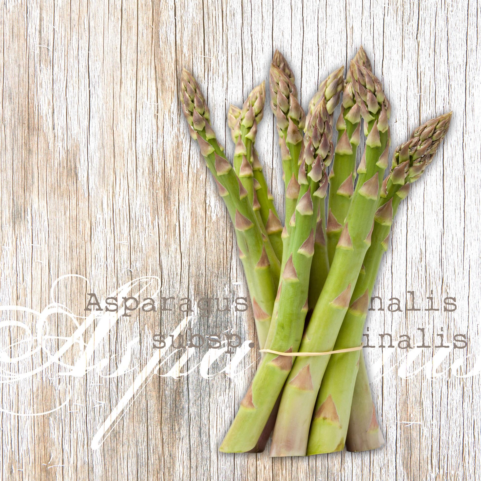 Servietten 25x25 cm - Asparagus