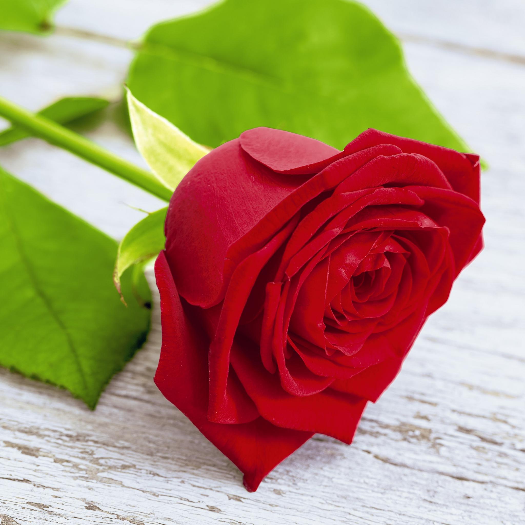 Servietten 33x33 cm - Lovely rose