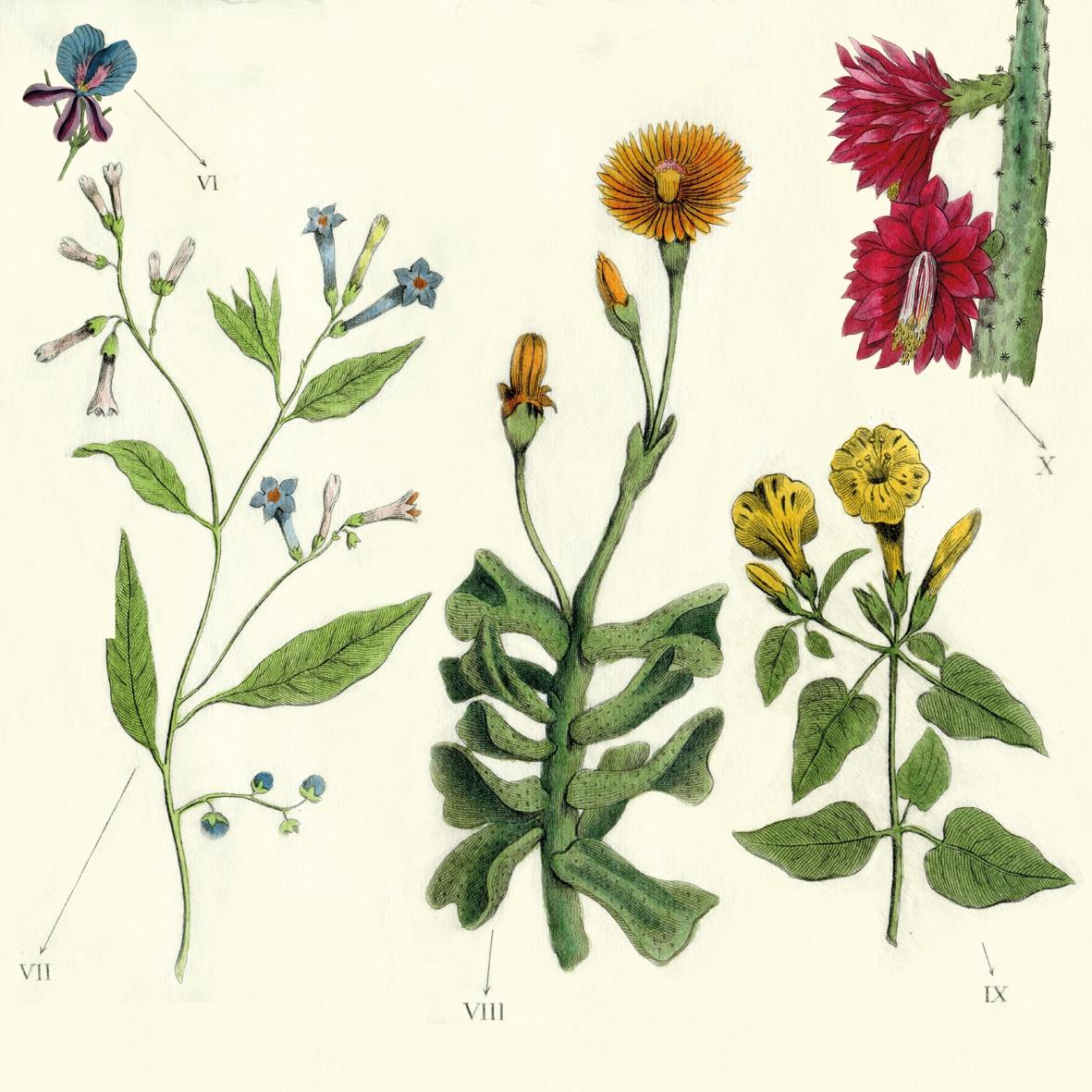Servietten 33x33 cm - Antique Botanicals
