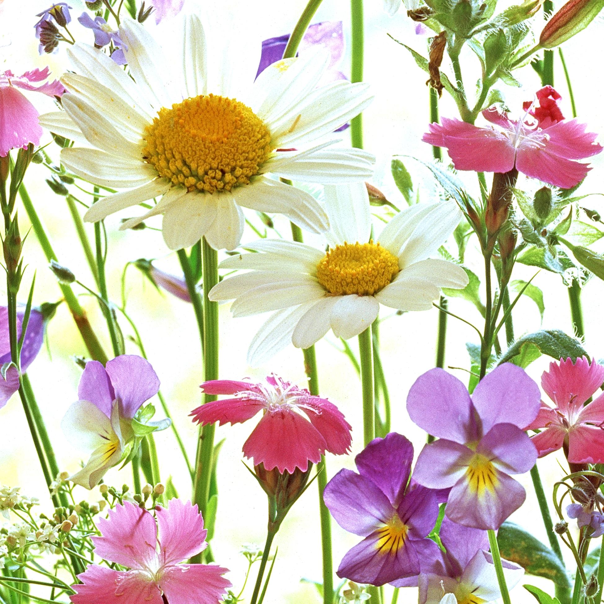 Servietten 33x33 cm - Flower Field