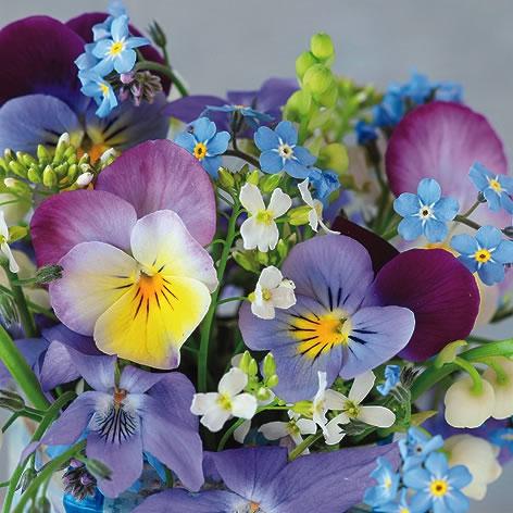 Servietten 33x33 cm - Violets & Forget Me Not