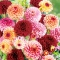 Servietten 33x33 cm - Bouquet of Dahlias