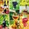 Servietten 33x33 cm - Wine Collage